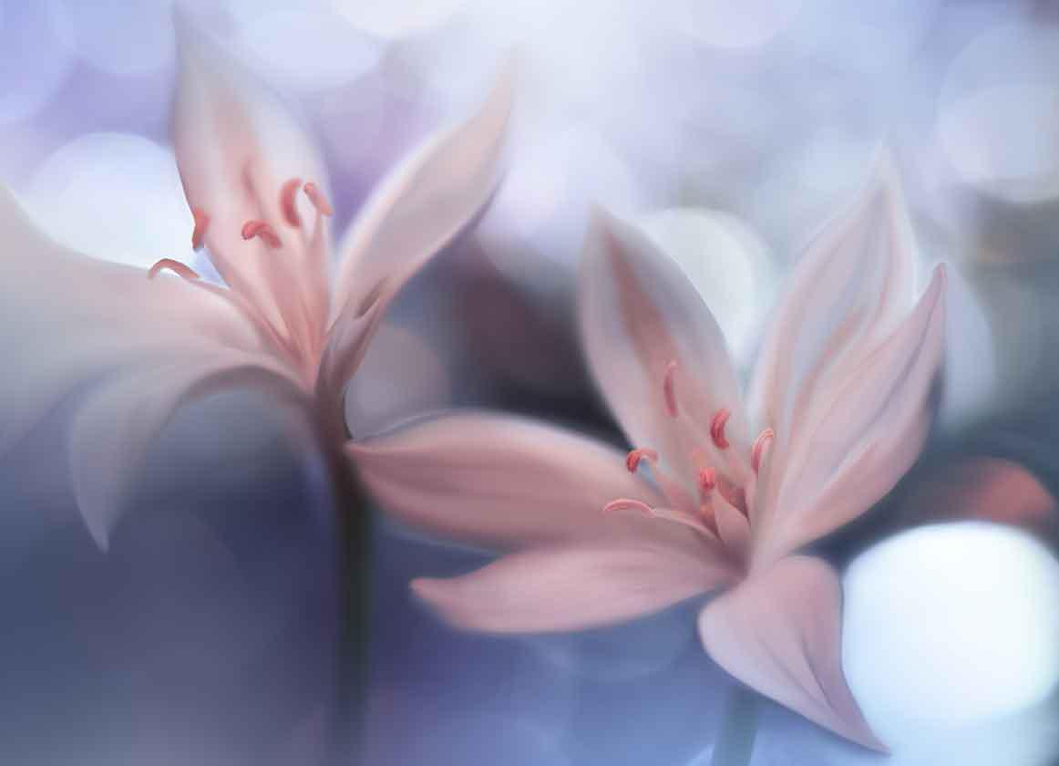 Weiße Blumen im weichen Stil, blauer Naturhintergrund