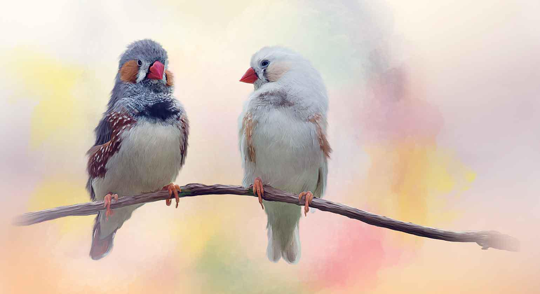Kastanienohrfink