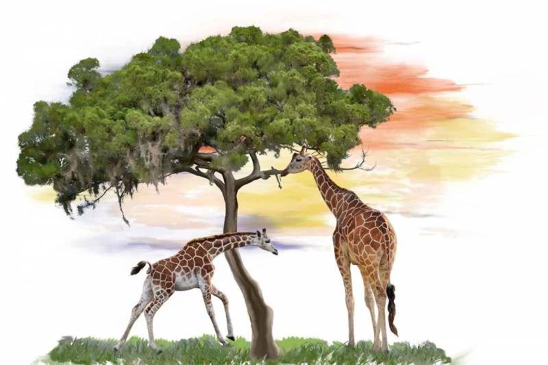 Giraffes near a tree watercolor